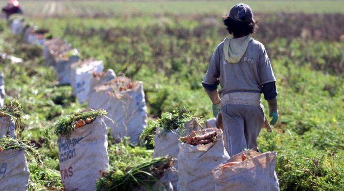 Detectan trabajo infantil en Salta