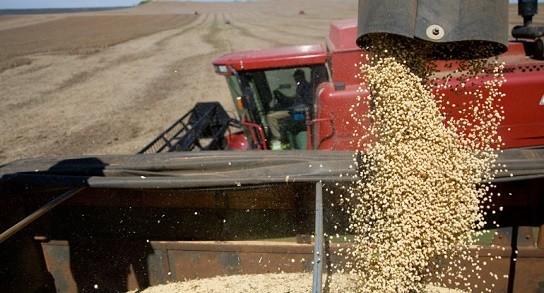 Recibidores paralizan la exportación de gramos