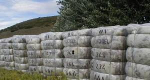 Peligran dos mil empleos por la baja de las retenciones a la lana