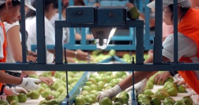 Lejos del 18 que propone el Gobierno, fruticultores acordaron 35% en paritarias