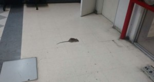 Triaca sigue sin pagarle a los empleados de limpieza y en el Ministerio ya aparecen ratas
