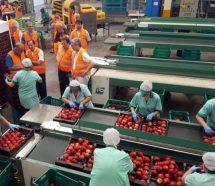 Tras las protestas, el gremio de la fruta firmó un 42% en paritarias