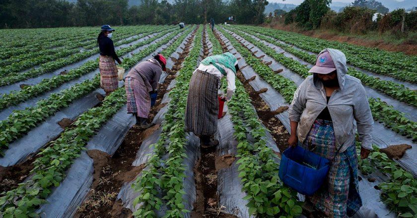 Tensión en el campo: ruralistas rechazaron el pedido de bono de fin de año $15.000 que hizo la UATRE