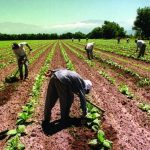 El RENATRE amplía cobertura de la Prestación por Desempleo a más trabajadores rurales